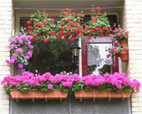 Klein Balkon Inrichten : De beste tips voor het inrichten van een kleine tuin of balkon