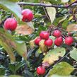 TIP: Tuinkalender Oktober